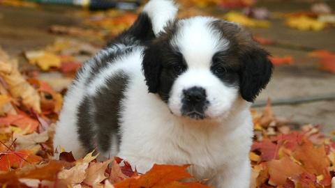 NOVA -- S41 Ep9: Five Dogs With Crazy Résumés