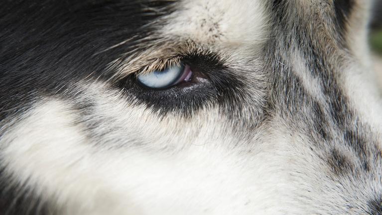 NOVA: Inside Animal Minds: Dogs & Super Senses