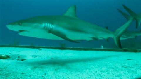 NOVA -- S39 Ep6: Kryptonite for Sharks