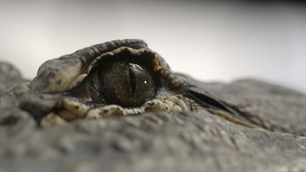 S41 Ep19: Spinosaurus vs. Alligator image