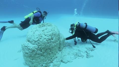 NOVA -- Finding Stromatolites