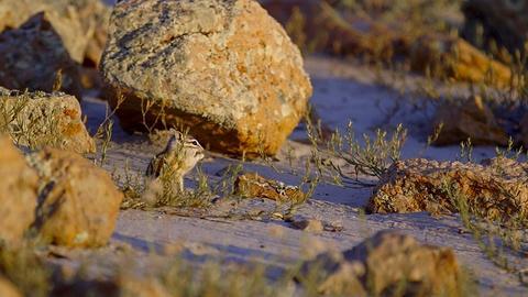 Mammal Survivors