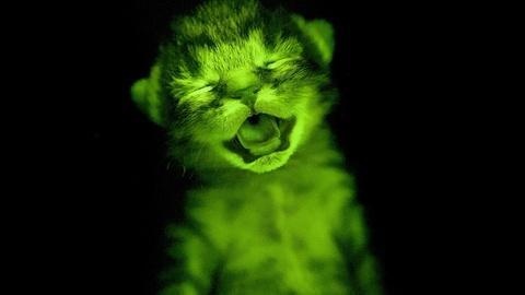 NOVA -- S43 Ep9: The Hidden Fluorescent World