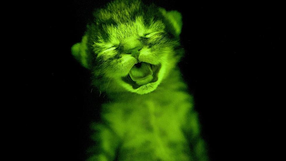 S43 Ep9: The Hidden Fluorescent World image