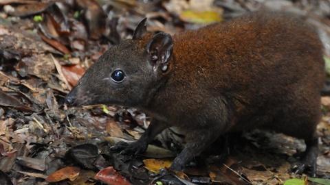 NOVA -- Australia: Strange Creatures Preview