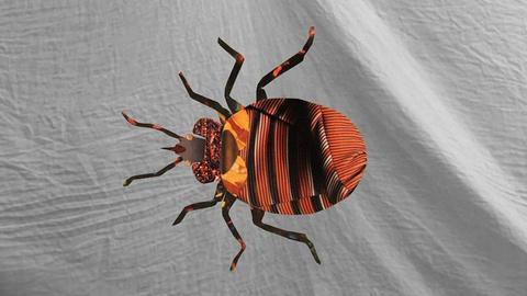 NOVA -- S40 Ep9: Bed Bug Sex