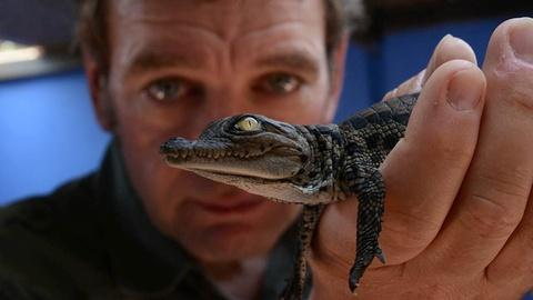 S1 E3: Episode 3 Preview | Crocodile