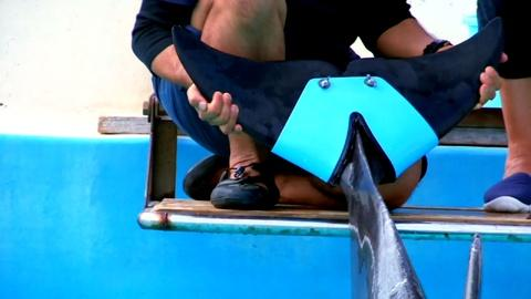 Operation Wild -- A Dolphin's Prosthetic Tail