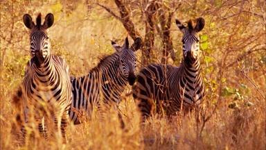 Gorongosa | New Approaches: Documentary