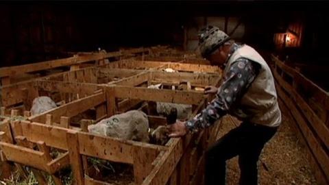 POV -- S24 Ep3: Feeding An Orphan Lamb