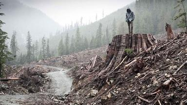 If a Tree Falls: A Story of the Earth Liberation Front...