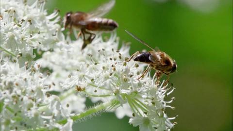 The Queen's Garden -- The Queen's Bees