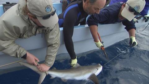 Saving the Ocean -- Shark Reef