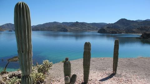 Saving the Ocean -- Destination Baja - Preview