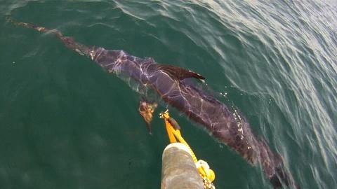 Saving the Ocean -- Swordfish! Part 2