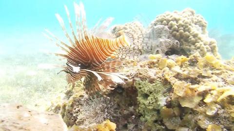 Saving the Ocean -- Tagging Lionfish
