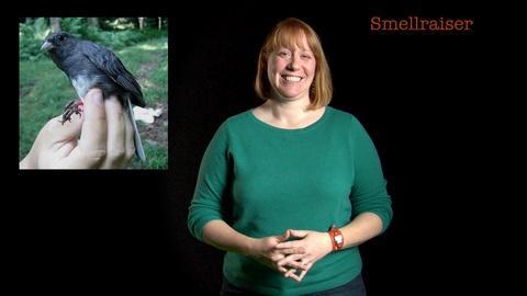 S2013 E34: Danielle Whittaker: Smellraiser