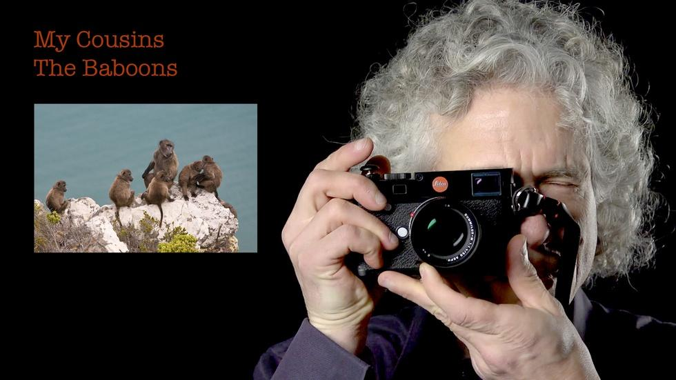 Steven Pinker: My Cousins The Baboons image