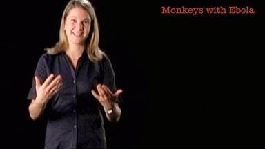 Eva Vertes: Monkeys with Ebola