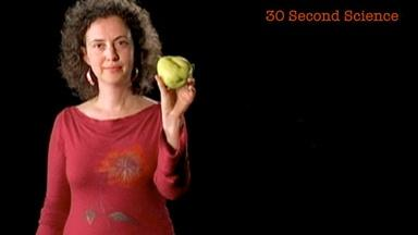 Ina Vandebroek: 30 Second Science