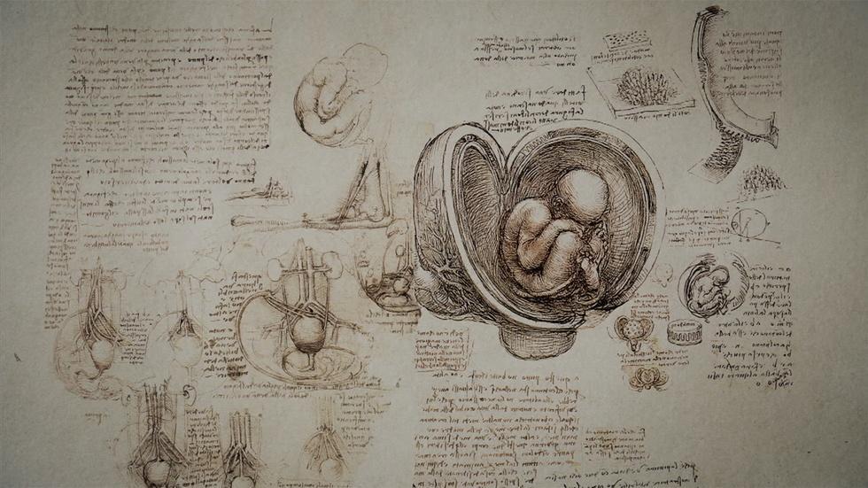 Leonardo's anatomical drawings  image