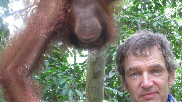 Sex in the Wild: Next on Sex in the Wild: Orangutans