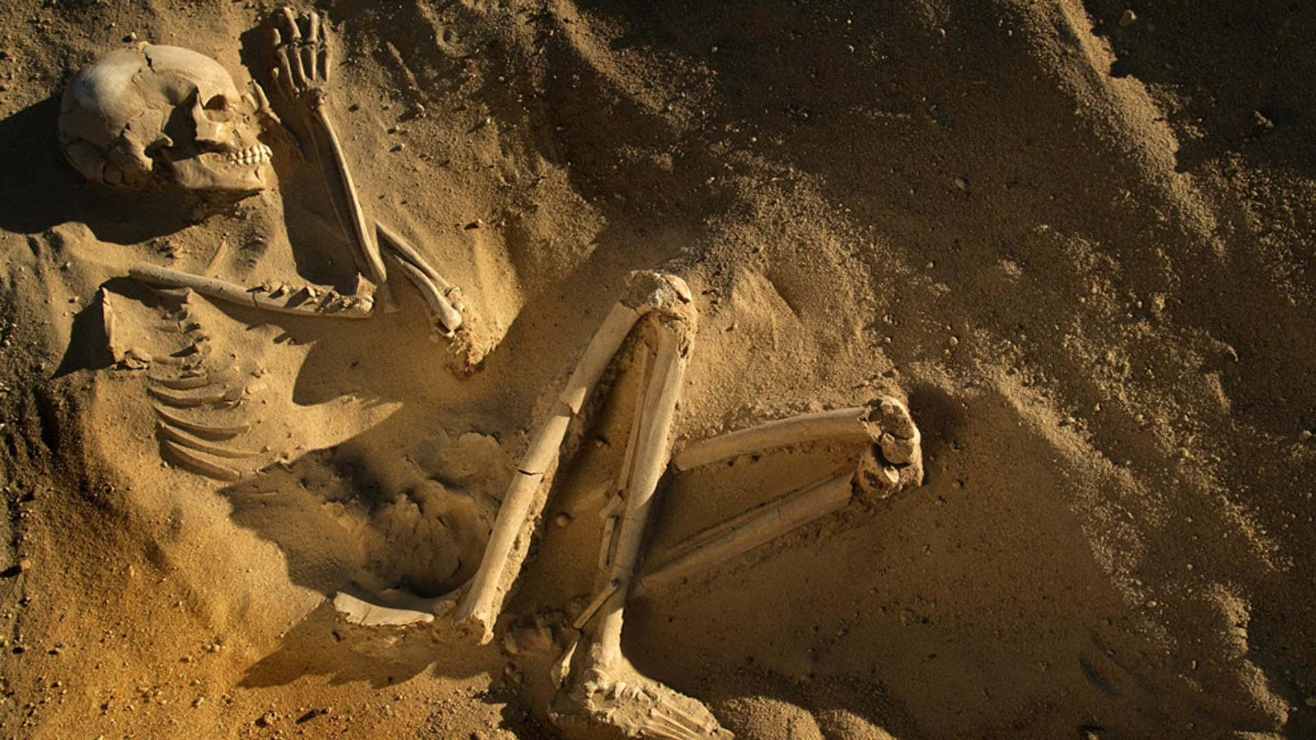 Skeletons Of The Sahara Pbs