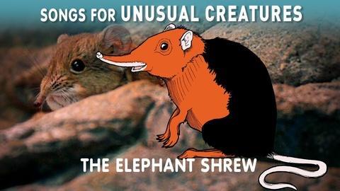 Songs for Unusual Creatures -- Elephant Shrew