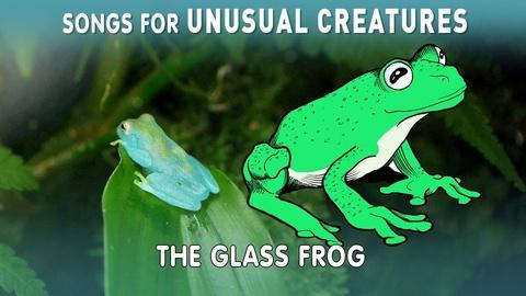 Songs for Unusual Creatures -- Glass Frog