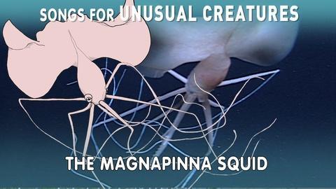 Songs for Unusual Creatures -- Magnapinna Squid