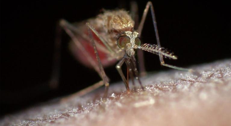 Spillover – Zika, Ebola & Beyond: Preview