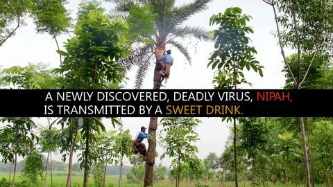 Spillover – Zika, Ebola & Beyond -- Sweet Drink, Deadly Disease