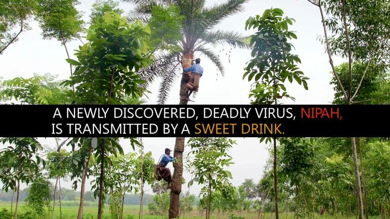 Spillover – Zika, Ebola & Beyond: Sweet Drink, Deadly Disease