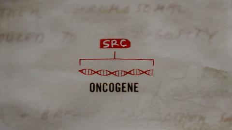 Cancer: The Emperor of All Maladies -- The Discovery of the Human Oncogene