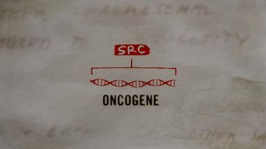The Discovery of the Human Oncogene