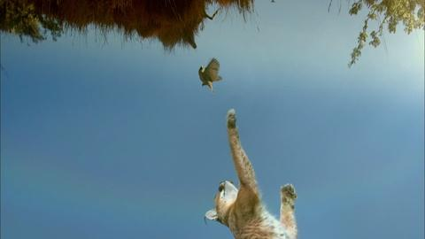 A Caracal's Incredible Vertical Launch