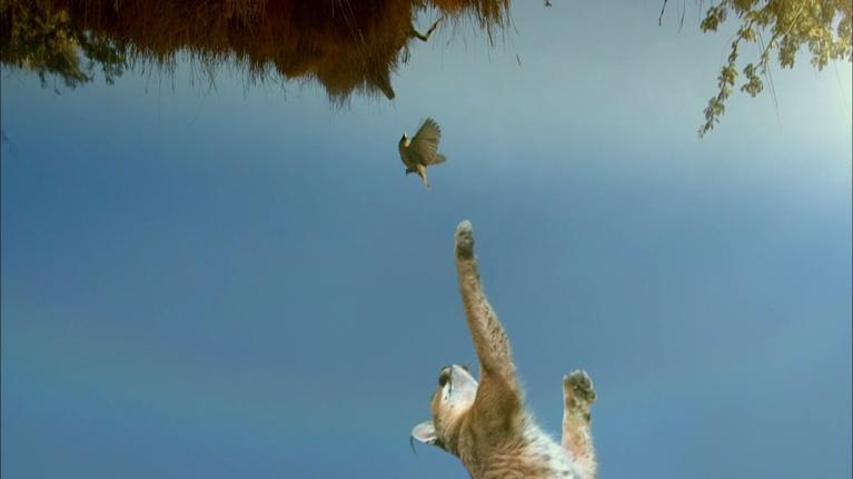 SuperNature - Wild Flyers: A Caracal's Incredible Vertical Launch