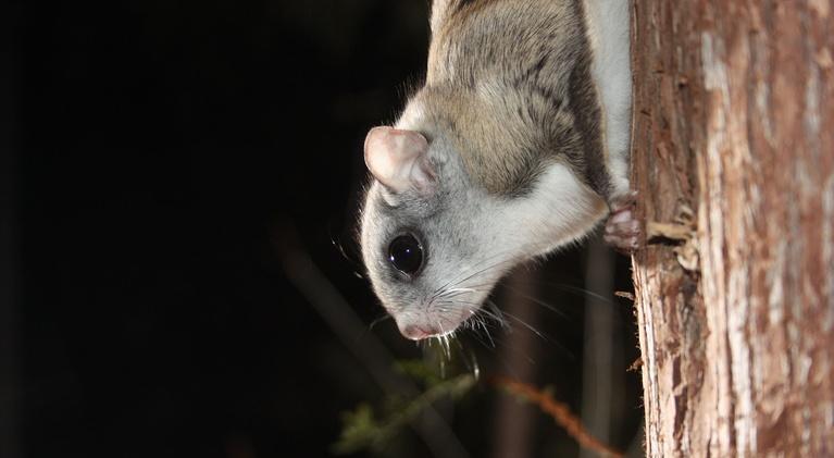 SuperNature - Wild Flyers: Defying Gravity