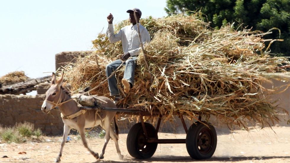 Developing Africa's Resources One Displaced Farmer at a Time image