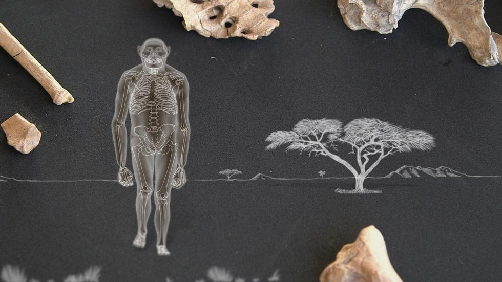 Amazing Places, Amazing Fossils: Lucy image