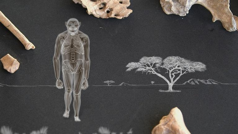 Your Inner Fish: Amazing Places, Amazing Fossils: Lucy