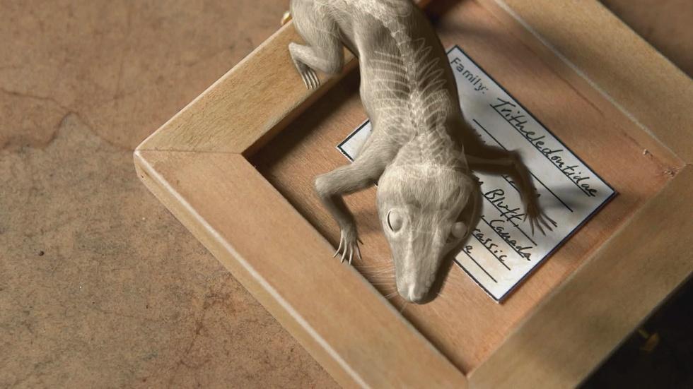 Amazing Places, Amazing Fossils: Tritheledont image