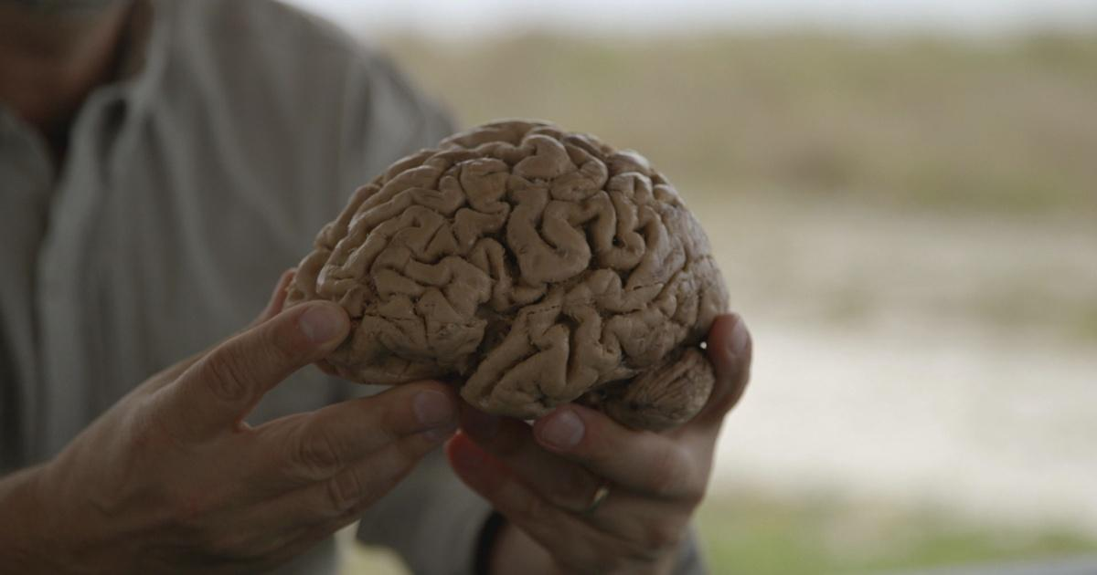 The 500 Million Year History Of The Human Brain Your Inner Fish Pbs