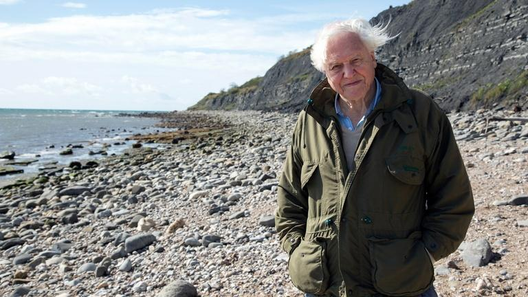 Attenborough And The Sea Dragon About Nature Pbs