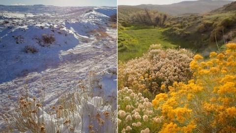 Spring Time-lapse