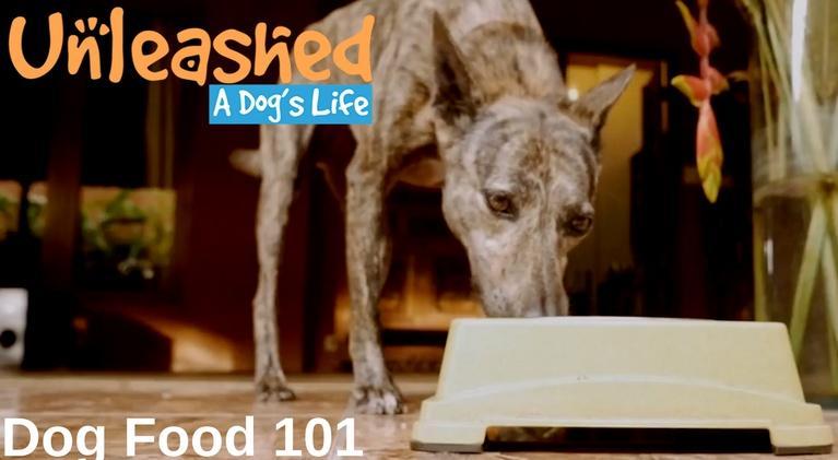Unleashed: A Dog's Life: Dog Food 101