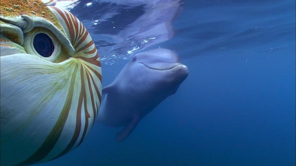 Baby Dolphin Meets 'Spy Nautilus' image
