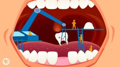 Where Do Teeth Come From?