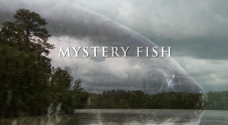 Georgia Outdoors: Mystery Fish