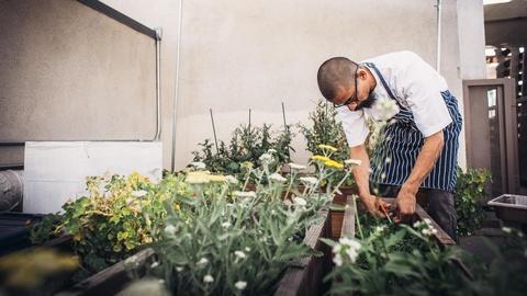 The Migrant Kitchen -- Chirmol